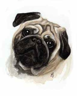 Watercolor painting pug dog