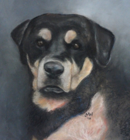 Pastel painting Rottweiler