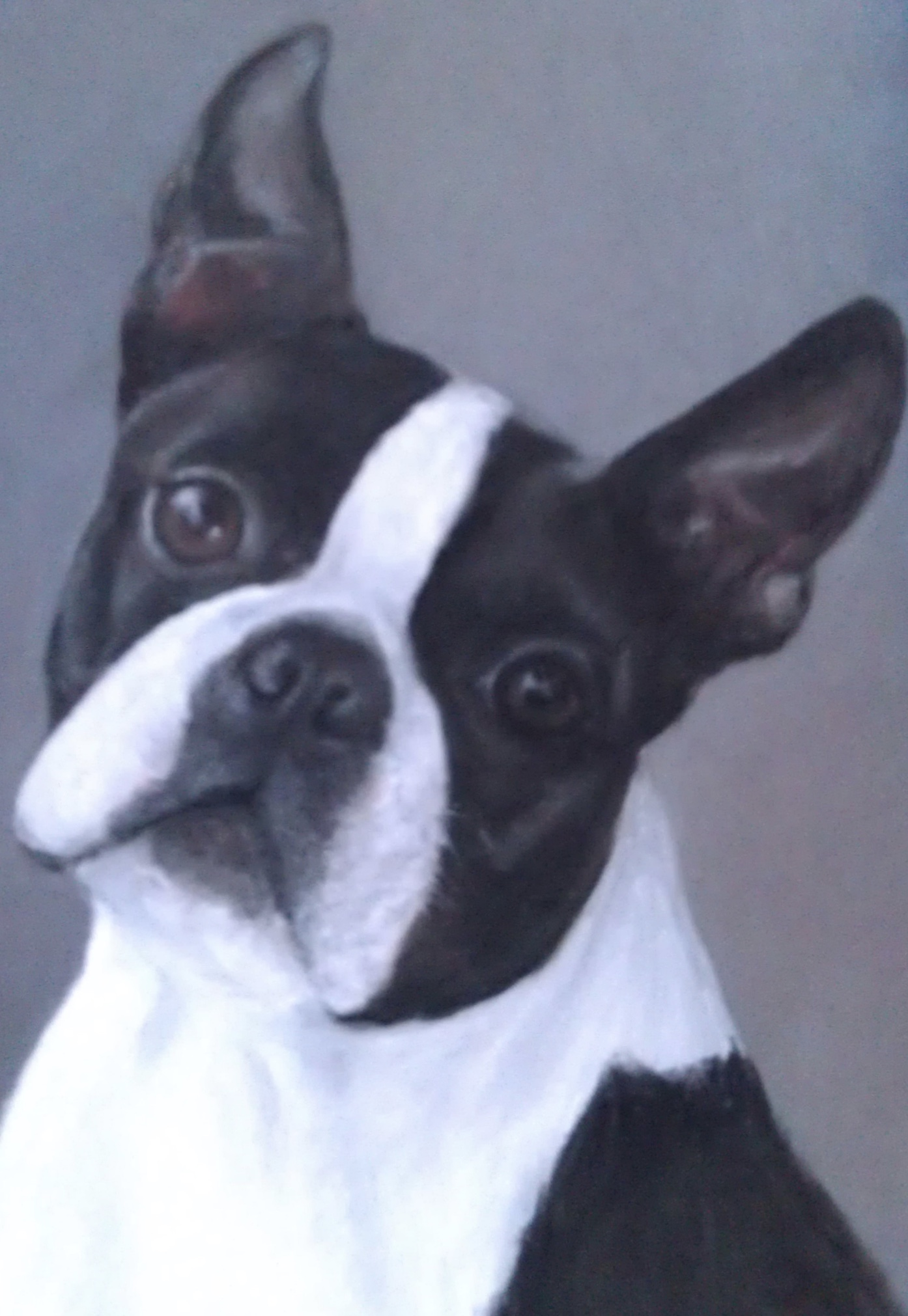 Pastel painting Boston Terrier