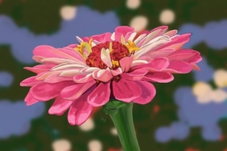 Single pink zinnia with blurred green and blue background