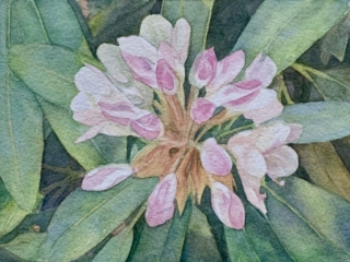 Rhododendron in watercolor